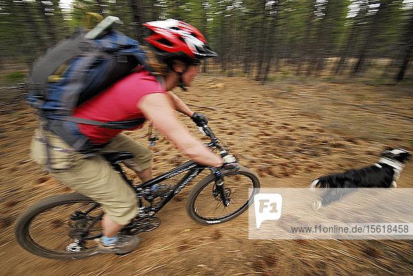 Woman Riding Mountain Bike Following Dog On Dirt Track