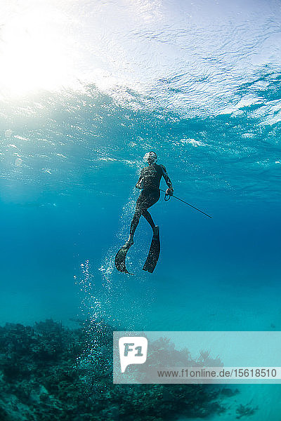 Diver surfacing with caught margate fish while spearfishing in ocean  Clarence Town  Long Island  Bahamas