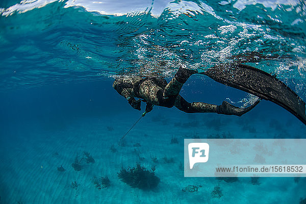 Man swimming underwater while spearfishing in ocean  Clarence Town  Long Island  Bahamas