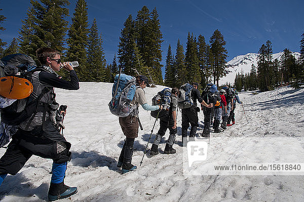Boys age 13-17 from the Venturing Crew 191 from Glendora  California put a year of training into practice as they attempt to reach the summit of Mount Shasta via the Avalanche Gulch route  Shasta Trinity National Forest  Northern California. Mount Shasta  is a massive  glaciated volcano and at 14 179 feet  is the second highest peak in the Cascade Range  and the fifth highest in California; it is not connected to any other peak and rises abruptly 10 000 feet from the surrounding terrain. The scouts from Venturing Crew 191  (Venturing Crews are a branch of the Boy Scouts that concentrate on adventurous activities) had prepared for a year for their ascent of Mount Shasta  this was their first experience with climbing on steep snow and they were assisted in their ascent by guides from SWS Mountain Guides. Crew president Jeremy Kolbach  adult leader Sandy Howlett  Crew member Tristan Rodriquez (left to right)  and others from Venturing Crew 191  hike through snow at about 7500 feet on the way to a high camp at the base of Mount Shasta  from where they will attempt to reach the summit of Mount Shasta via the Avalanche Gulch route  Shasta Trinity National Forest  Northern California.