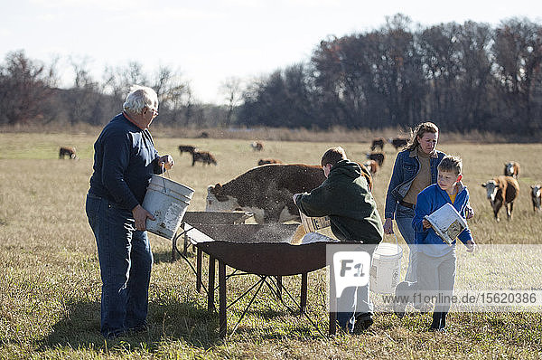 A generational farm family feeding cows by hand at a open troth in a field on a sunny fall day.