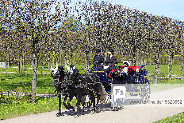 Photograph of horses pulling traditional carriage  Catherine Park  Pushkin  St. Petersburg  Russia