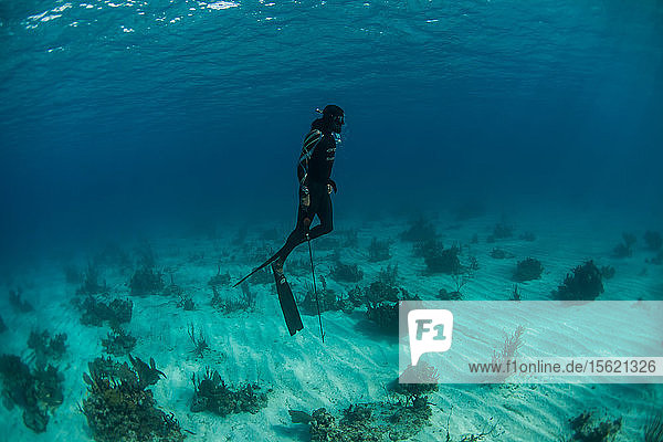 Diver spearfishing underwater  Clarence Town  Long Island  Bahamas