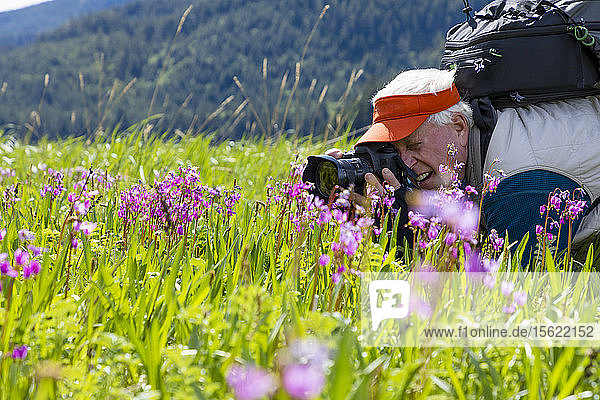 A man is photographing flowers in the grass in Sitkoh Bay  southeast Alaska  USA