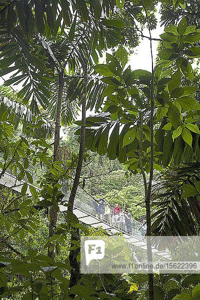 Blick auf Touristen auf einer Seilbrücke hinter Bäumen im Regenwald  La Fortuna  Alajueala  Costa Rica