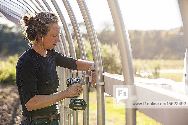 A farmer uses a cordless drill to assemble a hoophouse on a sunny day.