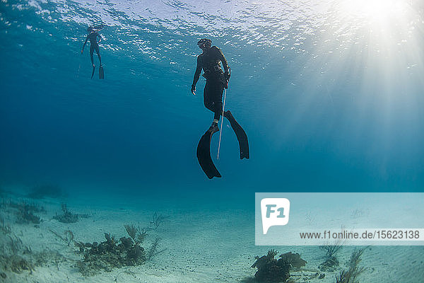 Two divers spearfishing underwater in ocean  Clarence Town  Long Island  Bahamas