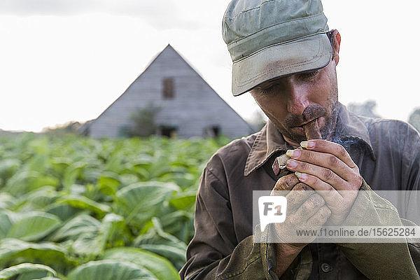 Worker smoking cigar during break on tobacco plantation  Vinales  Pinar del Rio Province  Cuba