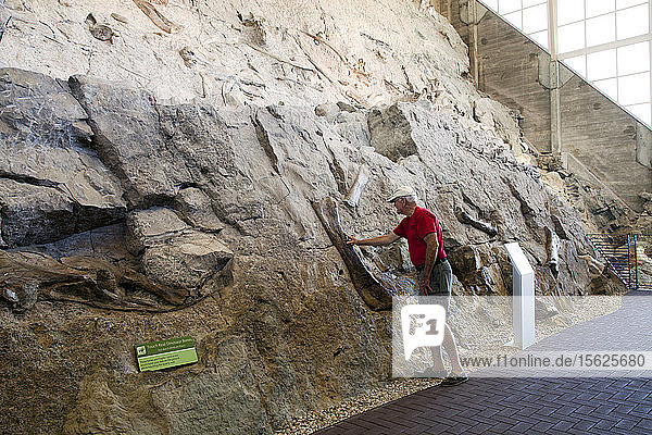 An actual in situ wall of dinosaur fossils is the main attraction at the Quarry Exhibit Hall at the Dinosaur National Monument. Straddling the Colorado/Utah state line  this park's exhibit allows visitors to actually feel dinosaur bones trapped during the late Jurassic period  approximately 148 million years ago.