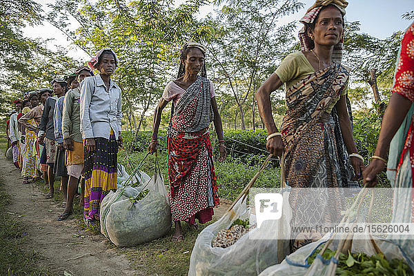 Tea Pickers Line Up To Weigh Their Harvest In Assam  India