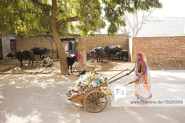 An Indian woman pushes a cart filled with garbage in Agra  India.