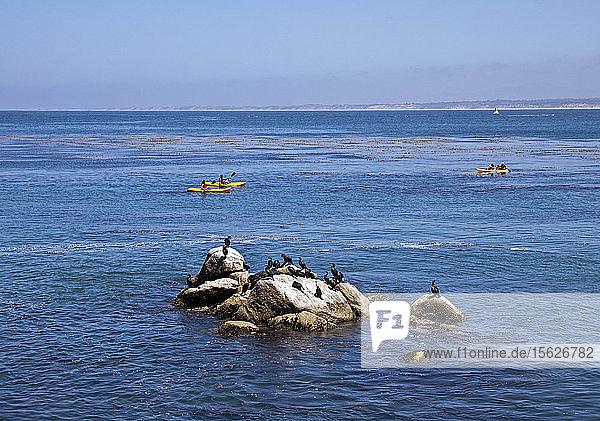 Die durch den Schriftsteller John Steinbeck berühmt gewordene Cannery Row an der Monterey Bay ist heute einer der größten Touristenmagneten in Kalifornien. Neben Einkaufsmöglichkeiten und Restaurants am Wasser können Besucher Kajaks mieten  um die Bucht selbst zu erkunden  hier vorbei an einem Felsenbarsch mit Anhingas.