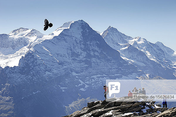 Climbers are standing on top of the Schwarzhorn  a mountain above Grindelwald in the Swiss Alps. The famous Eiger north face is in the background. A black crow flies over the peaks.