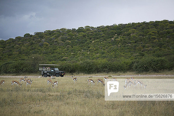Antelope in field during Africa safari
