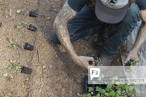 Manager Todd Eittreimg pflanzt auf der Global Growers Farm in Stone Mountain  GA. Es handelt sich um einen städtischen Bauernhof in der Region Atlanta.