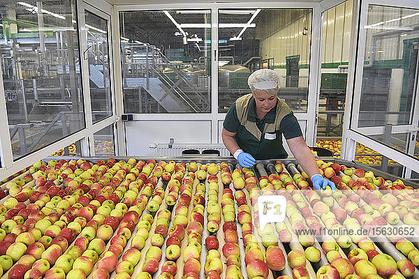 Arbeitnehmerin kontrolliert Äpfel auf Förderband in Apfelsaftfabrik