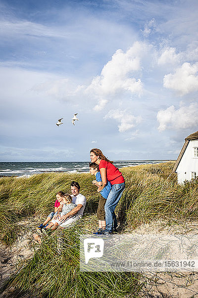 Family in a beach dune looking at view  Darss  Mecklenburg-Western Pomerania  Germany