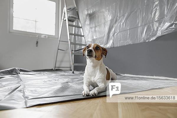 Hund sitzt in einem Zimmer  das renoviert wird