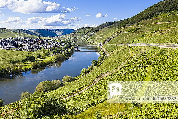 Luftaufnahme der Mosel inmitten des Landes  Trittenheim  Deutschland