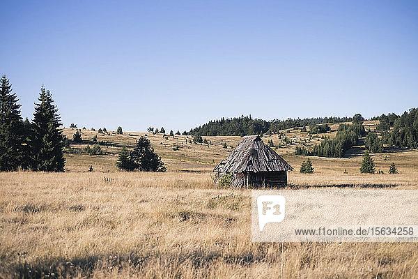 Alte Häuser auf Grasland vor strahlend blauem Himmel im Tara-Nationalpark  Serbien