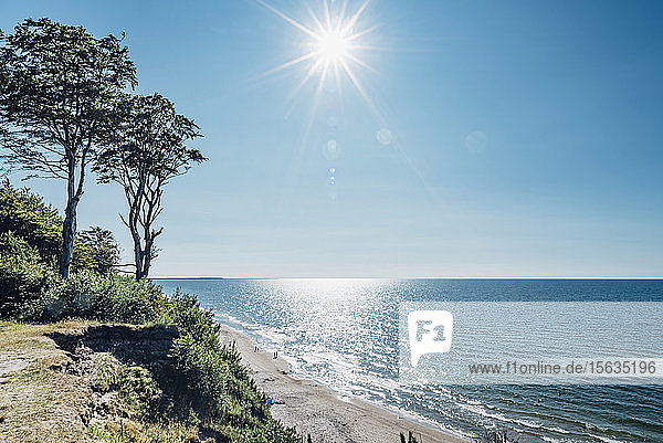 Trees growing at shore by sea against sky on sunny day  Poland