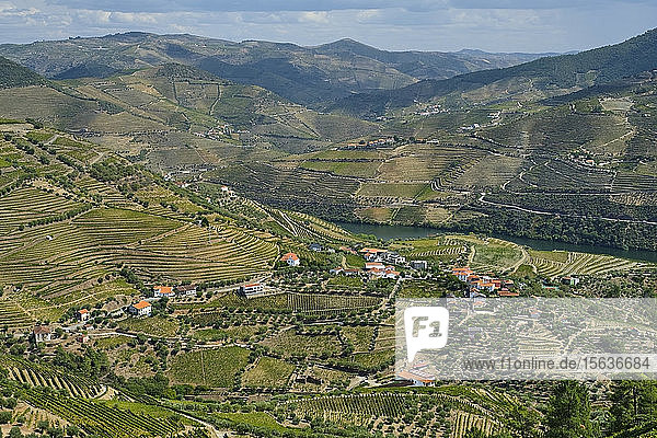 Portugal  Douro Valley  terraced vineyard overlooking village and Douro river