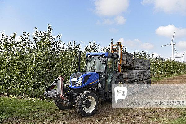 Traktor mit Kisten mit geernteten Äpfeln auf einer Obstplantage