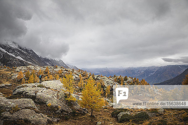Hiker walking through alpine plateau in autumn  Sondrio  Italy