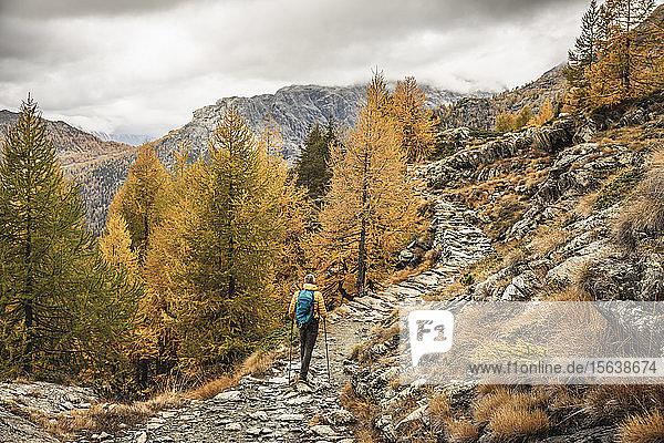 Wanderer  der im Herbst durch die Hochebene der Alpen wandert  Sondrio  Italien