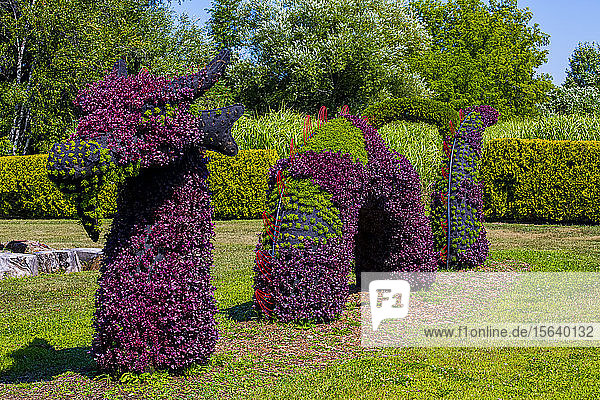 Plants with purple and green foliage created in the shape of a dragon or sea monster; St Lazare  Quebec  Canada