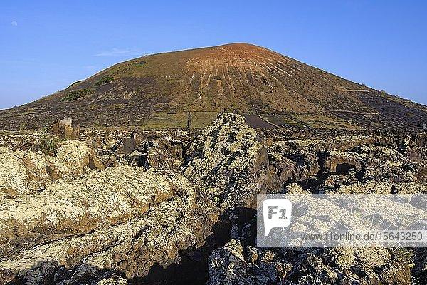 Lavafelsen mit Flechten  Vulkan Montana Testeyna  bei Tias  Lanzarote  Kanaren  Spanien  Europa