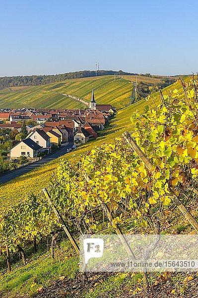 Escherndorf bei Volkach  Mainfranken  Unterfranken  Franken  Bayern  Deutschland  Europa