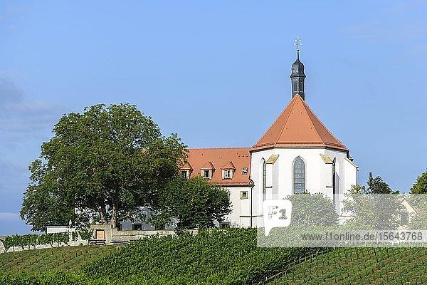 Weinberg mit Vogelsburg mit Kirche Mariä Schutz  Volkach  Mainfranken  Franken  Unterfranken  Bayern  Deutschland  Europa