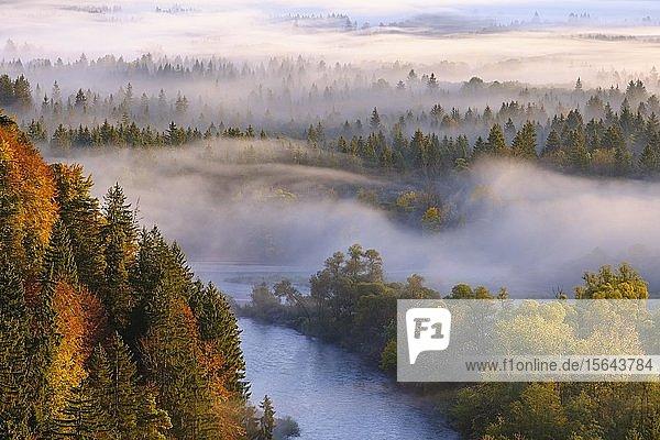 Mündung der Loisach in die Isar  Pupplinger Au bei Sonnenaufgang  Naturschutzgebiet Isarauen  zwischen Icking und Wolfratshausen  Oberbayern  Bayern  Deutschland  Europa