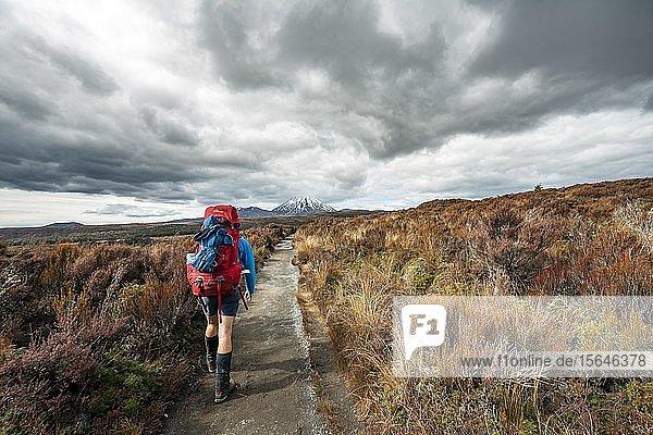 Hikers on hiking trail Tongariro Northern Circuit  New Zealand Great Walks  back volcano Mount Tongariro and Mount Ngauruhoe  Tongariro National Park  North Island  New Zealand  Oceania