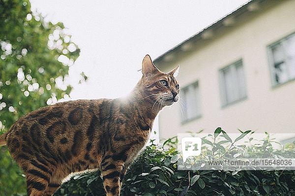 Niedrigwinkelansicht einer Katze  die an einem sonnigen Tag an Pflanzen steht