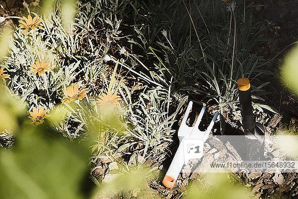 Gardening fork and spade in garden of flowers