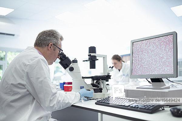Wissenschaftler inspizieren das Bakterienwachstum unter Mikroskopen im Labor