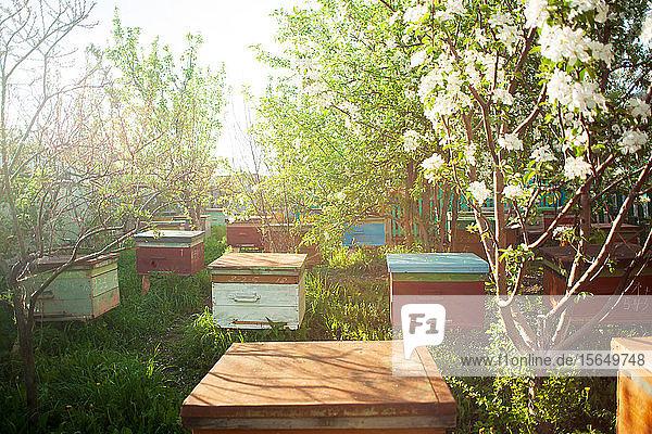 Bienenstöcke im Bienenstock