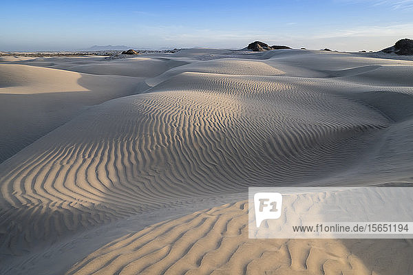 Patterns in the dunes at Sand Dollar Beach  Magdalena Island  Baja California Sur  Mexico
