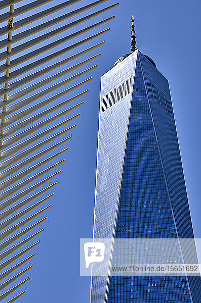 One World Trade Center in New York City  New York  United States of America
