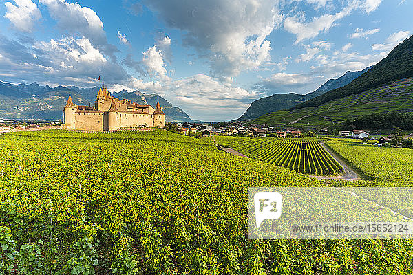 Castle of Aigle set in rolling hills of vineyards  canton of Vaud  Switzerland