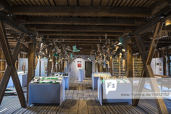Shoes hanging from wooden ceiling in Fagus Factory  Lower Saxony  Germany