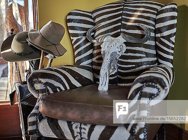 Remains of wildebeest cranium on zebra armchair. Mpumalanga  South Africa