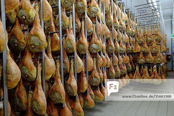 San Daniele ham preparation and maturing  San Daniele del Friuli  Udine  Friuli Venezia Giulia  Italy  Europe.