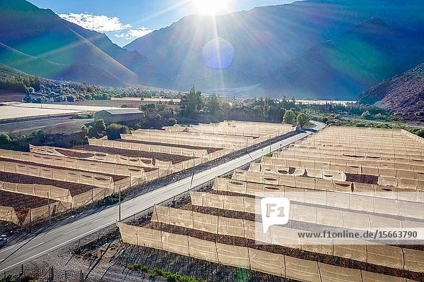 Fields and farmland for the growth of grapes for Pisco production nestled in the mountains of the Elqui Pisco Valley  Coquimbo  Chile.