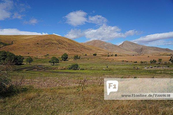 Landscape on the RN7 close to Ambalavao  Fianarantsoa province  Ihorombe Region  Southern Madagascar