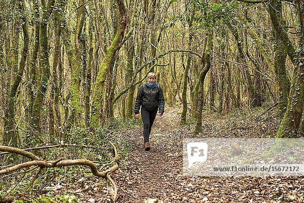 Medium age woman walking in the forest at fall  Santoña  Cantabria  Spain  Europe.