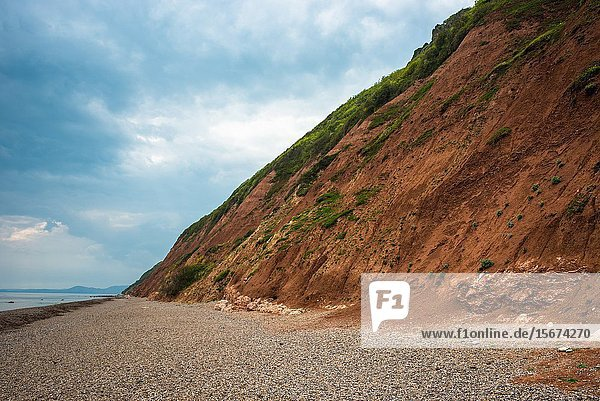 Golden brown cliffs and beach at Branscombe on the Jurassic coast in Devon,  England,  UK.