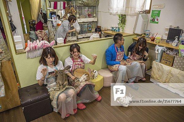 Mimi Rabbit Cafe. Ikebukuro district  Toshima  Tokyo  Japan  Asia.